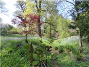 A beautiful glade of spring blossoming into summer in the Dorfold Hall garden.