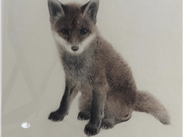 Fox cub: German lithograph, artist unknown