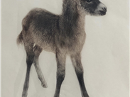 Little Donkey, lithograph by unknown German artist